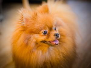 Собачье кафе - BAU House Dog Cafe