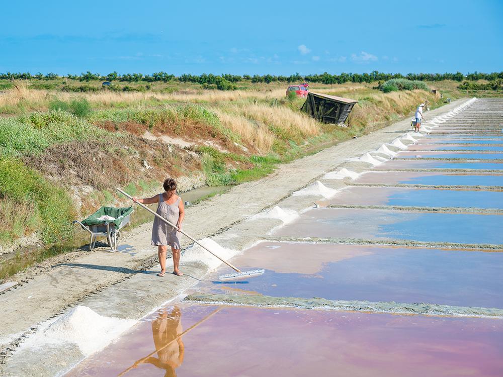 Сбор цветочной соли на острове Ре
