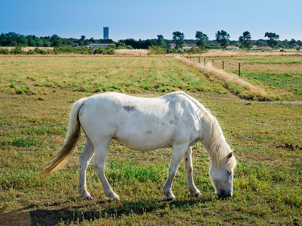 Просто красивый конь, почти единорог:)
