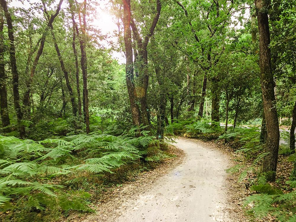 Сказочные тропы в сказочных лесах Олерона...
