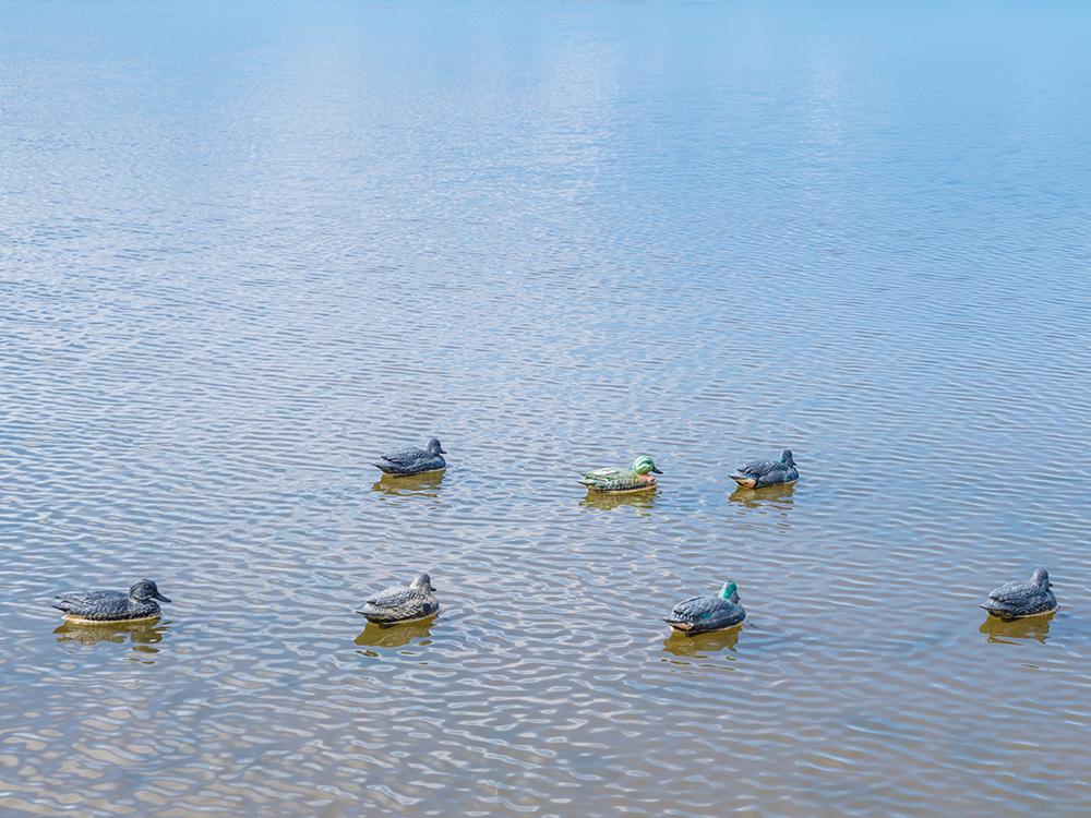 Вопрос: кому понадобились эти фальшивые утки в диком пруду?