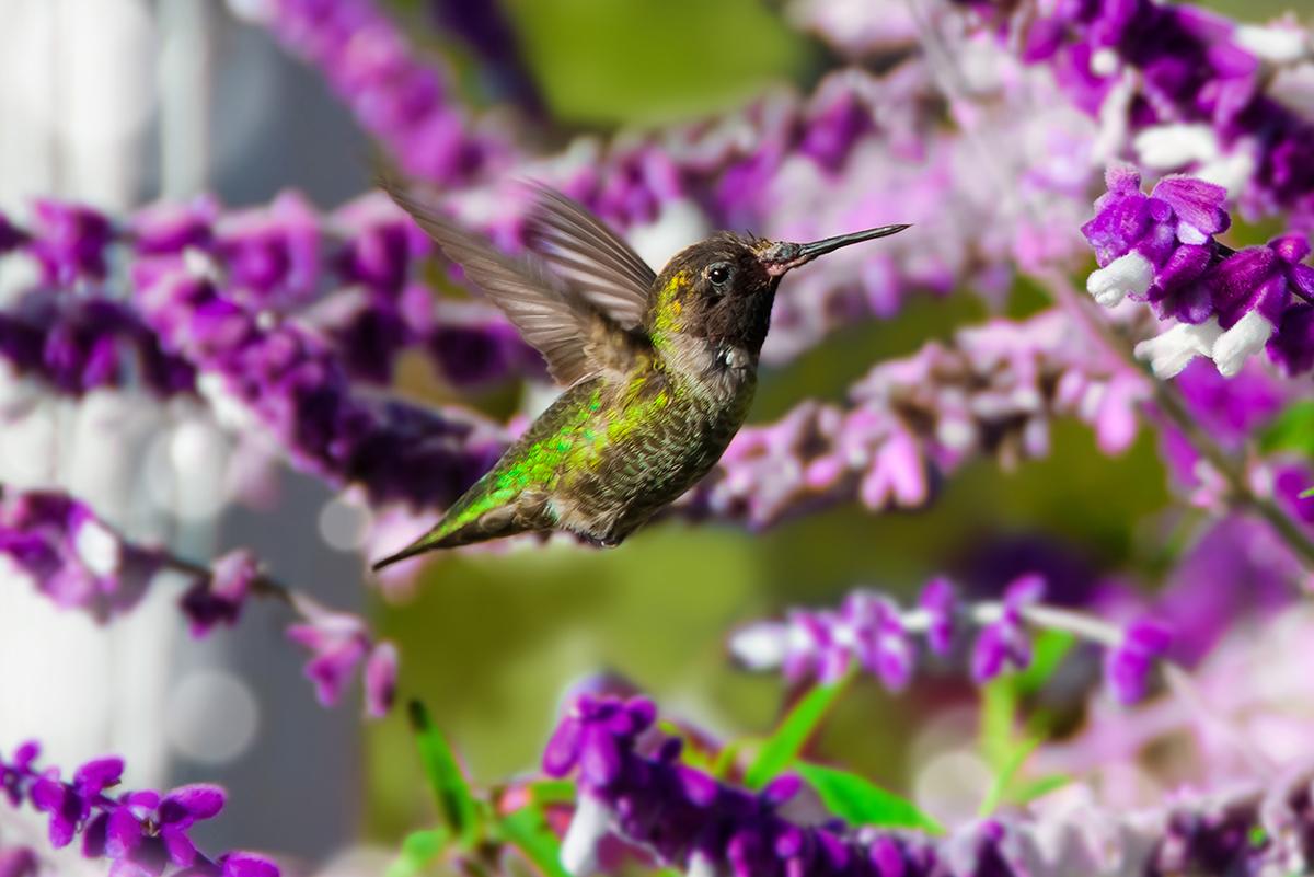 Крошка колибри