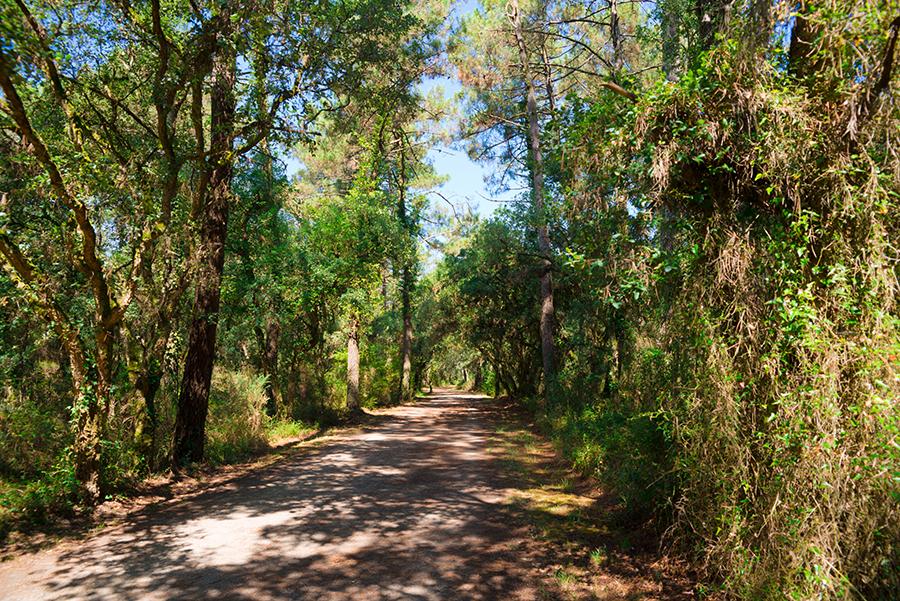 Сказочный лес на пути из Капбретона в Байону
