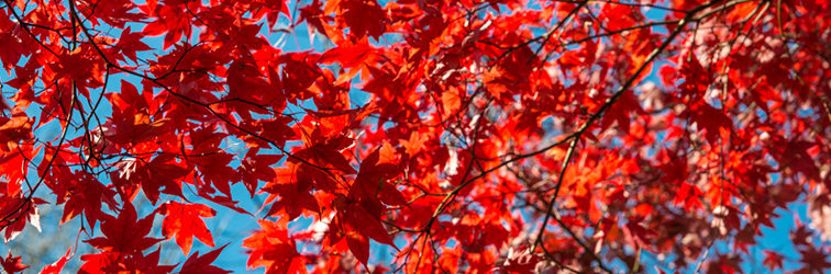 Осень в Канаде — Велопрогулка по Торонто
